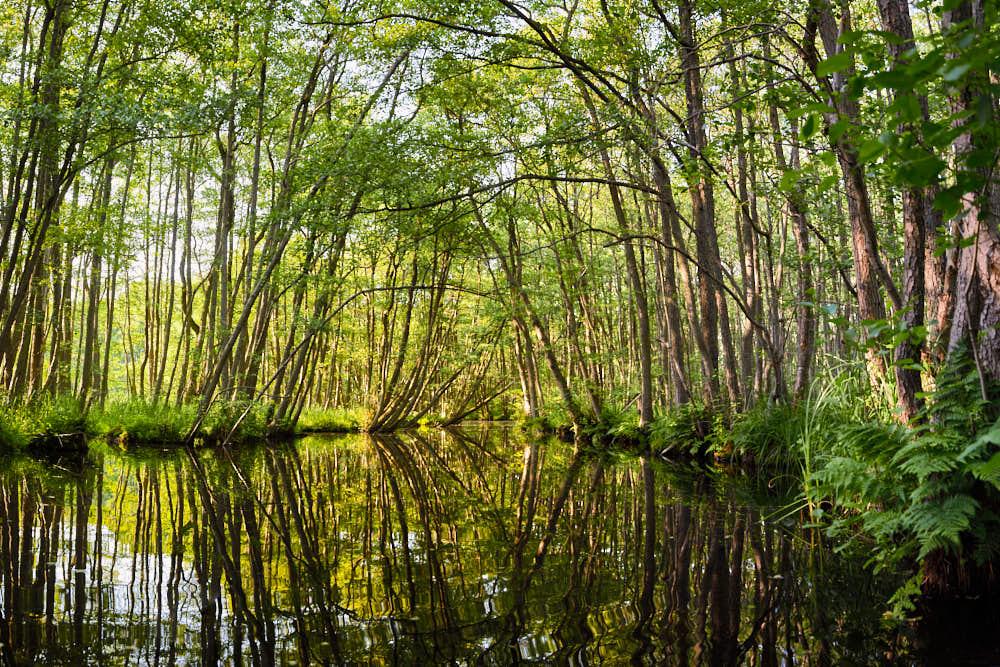 Pinnow, Naturfotografie von olbor Oliver Borchert aus Schwerin