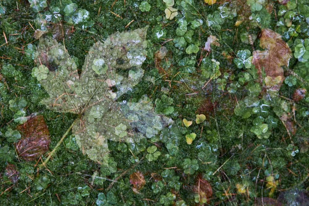 Waldboden, Naturfotografie von olbor Oliver Borchert aus Schwerin