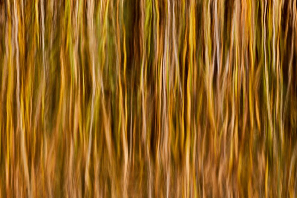 Wasserspiegelung, Naturfotografie von olbor Oliver Borchert aus Schwerin