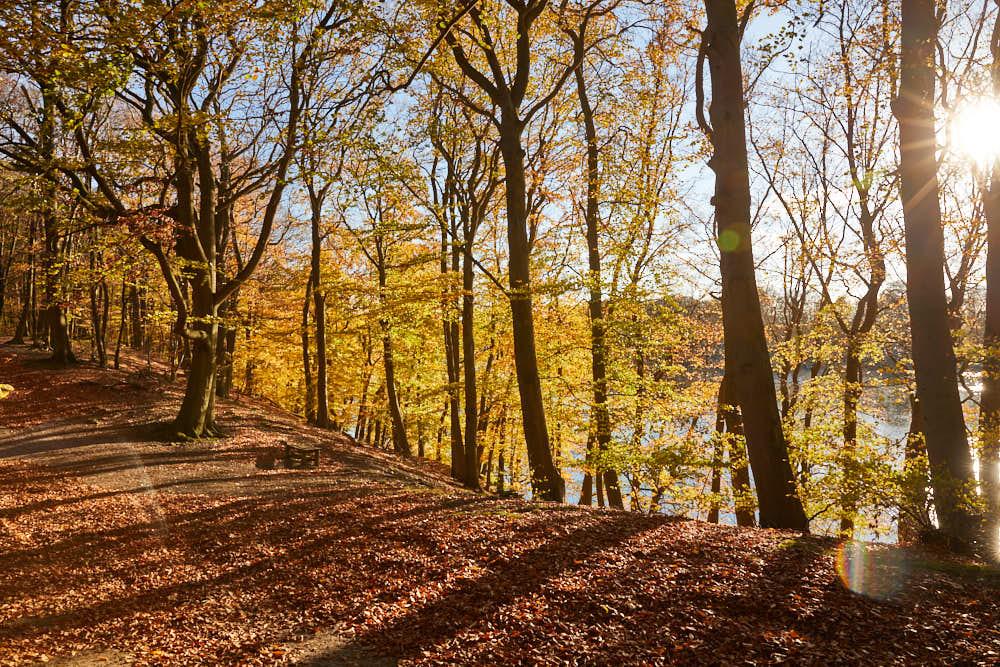Herbstwald, Naturfotografie von olbor Oliver Borchert aus Schwerin