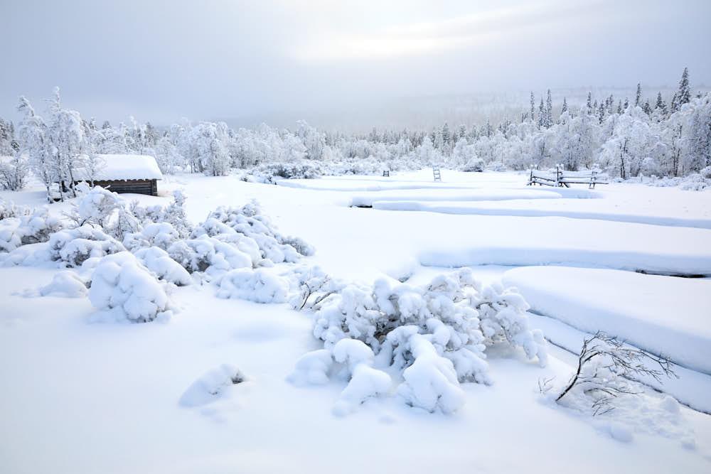 Winterlandschaft, Finnland, Lappland, Naturfotografie von olbor Oliver Borchert aus Schwerin