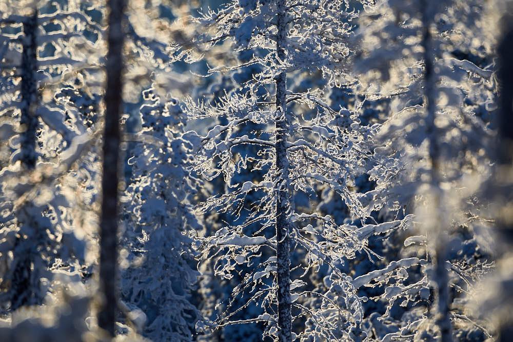 Winterwald, Naturfotografie von olbor Oliver Borchert aus Schwerin