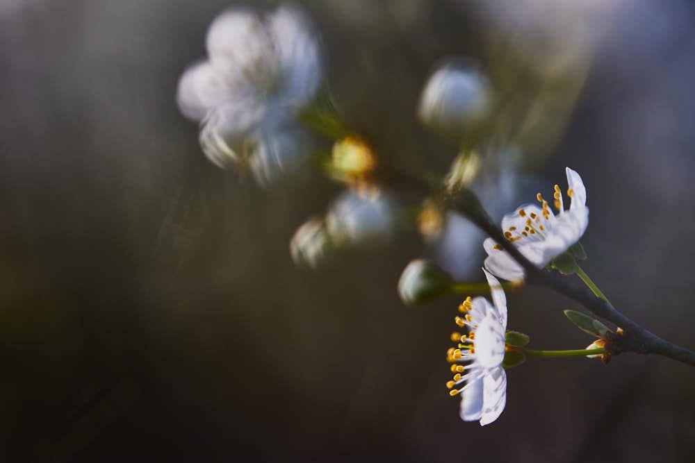Blüte, Naturfotografie von olbor Oliver Borchert aus Schwerin