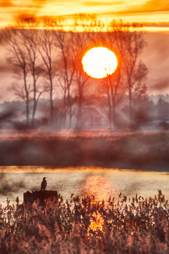 Sonnenaufgang, Darss, Naturfotografie von olbor Oliver Borchert aus Schwerin