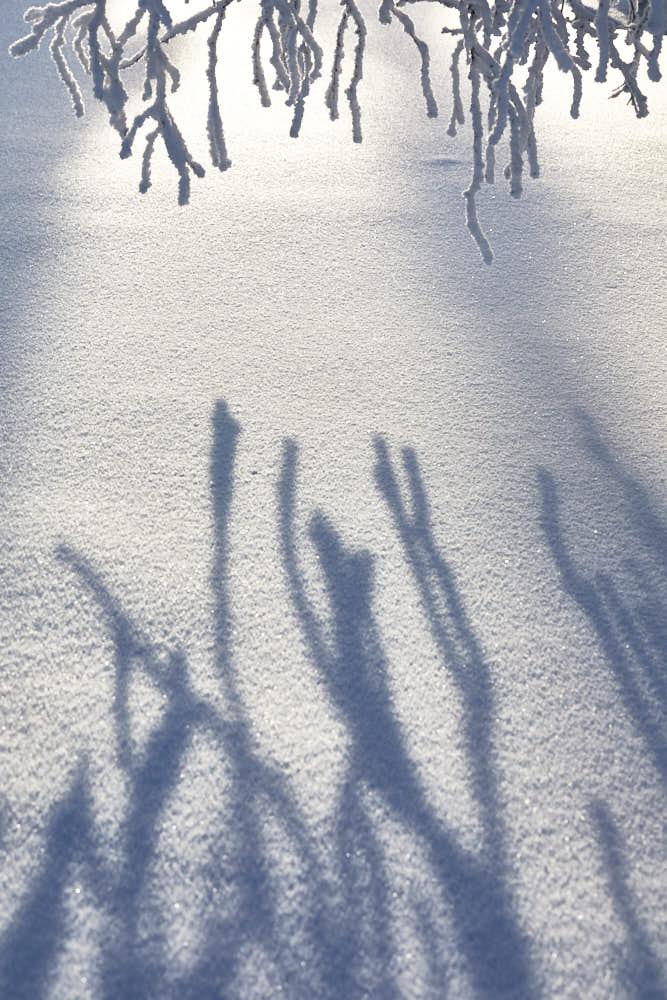 Winter, Lappland, Naturfotografie von olbor Oliver Borchert aus Schwerin