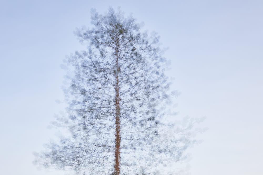 Kiefer, Naturfotografie von olbor Oliver Borchert aus Schwerin