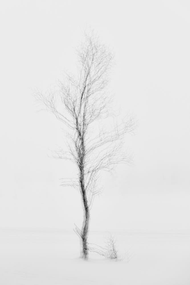 Birke, Naturfotografie von olbor Oliver Borchert aus Schwerin