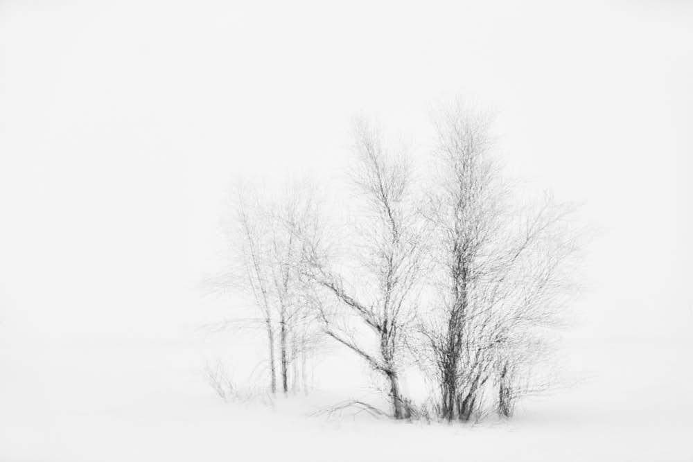 Baum, Naturfotografie von olbor Oliver Borchert aus Schwerin