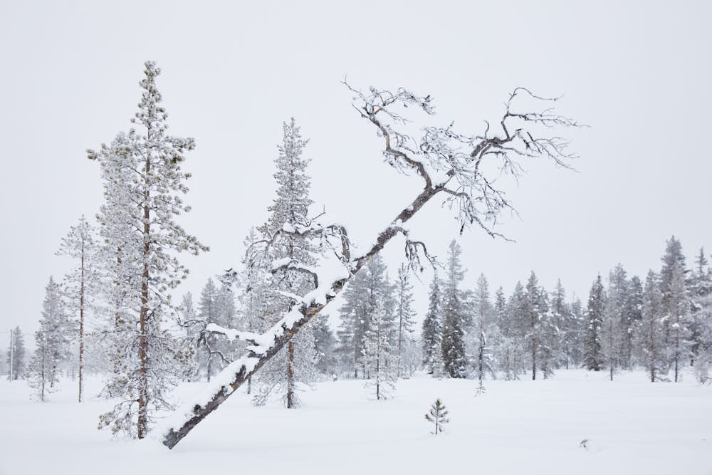 Winetr, Moor, Lappland, Naturfotografie von olbor Oliver Borchert aus Schwerin