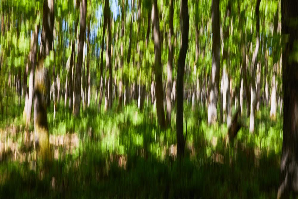 Eichenwald, Naturfotografie von olbor Oliver Borchert aus Schwerin